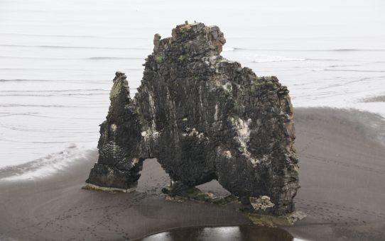 Robbenbeobachtung auf der Halbinsel Vatnsnes (20.07.)